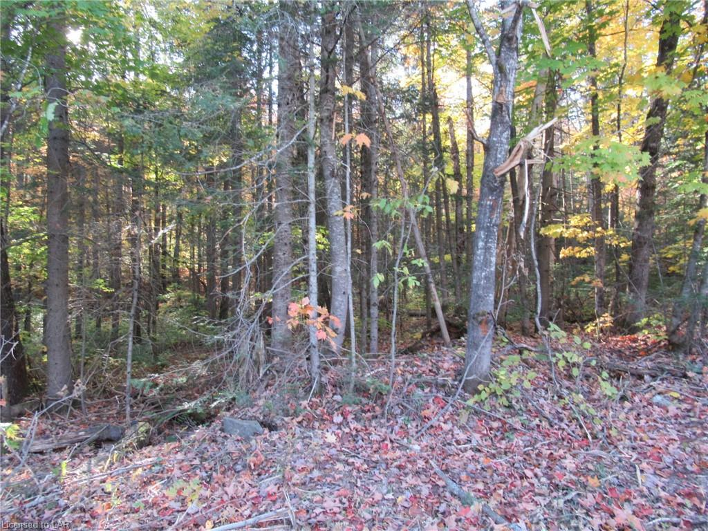 Lot 5 Whitney Road, Perry Township Ontario, Canada