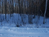 6 SKI RIDGE Trail, Eagle Lake Village Ontario