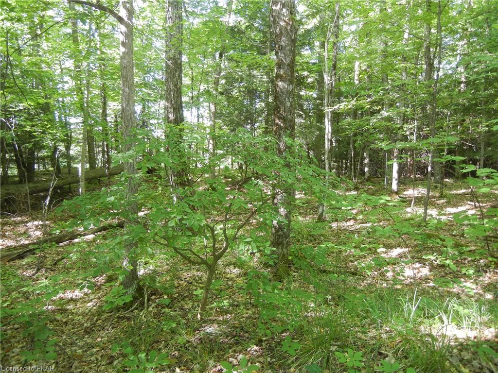 ANTELOPE Trail, North Kawartha Township, Ontario, Canada