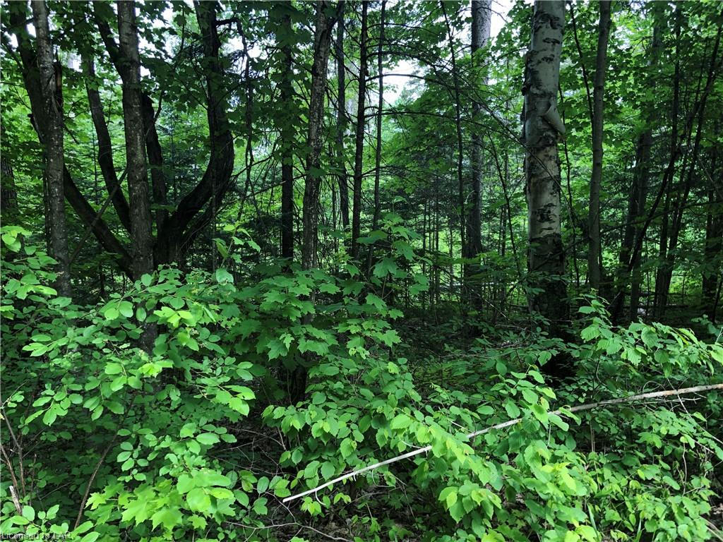 Lot 2 Mcmullen Drive, Emsdale Ontario, Canada
