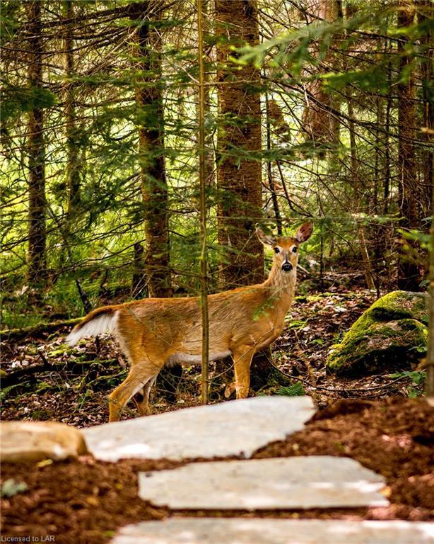 151 Deerfoot Trail, Huntsville Ontario, Canada