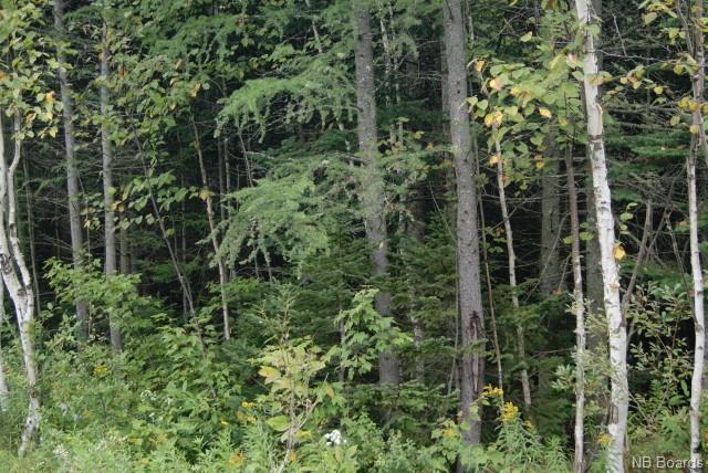 Lot 7 605 Route, Millville New Brunswick, Canada